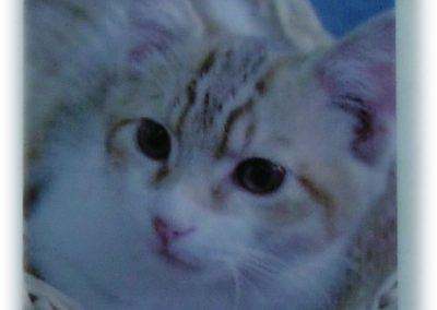 Photo Paper (Cat)